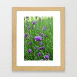 Chive flower Framed Art Print