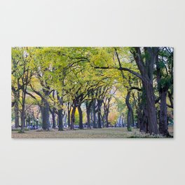 Central Park Fall Series 8 Canvas Print