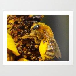 Bumblebee on a Sunflower Art Print