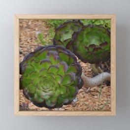 succulent depth Framed Mini Art Print