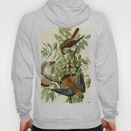 American Sparrow Hawk (Falco sparverius) Hoody