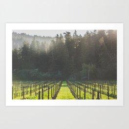 Anderson Valley Vineyard #4 Art Print