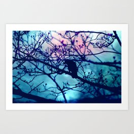 Raven in the night Art Print