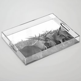 Herd of Eland stand in tall grass in African savanna Acrylic Tray