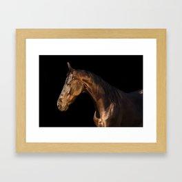 marwary horse Framed Art Print