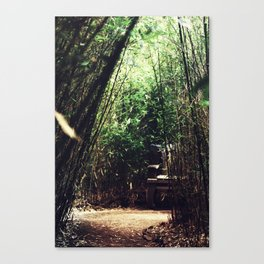 Wooden Bench in a Bamboo Forest Canvas Print