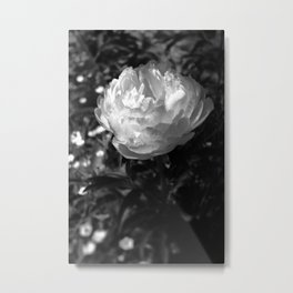 Peony Fine Art Print in Black and White Metal Print