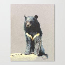 Formosan Black Bear Canvas Print