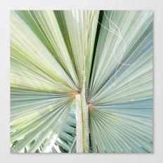 Fanned Palms Canvas Print