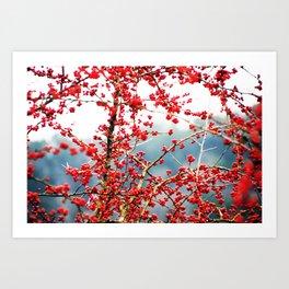 Hawthorn Tree Art Print