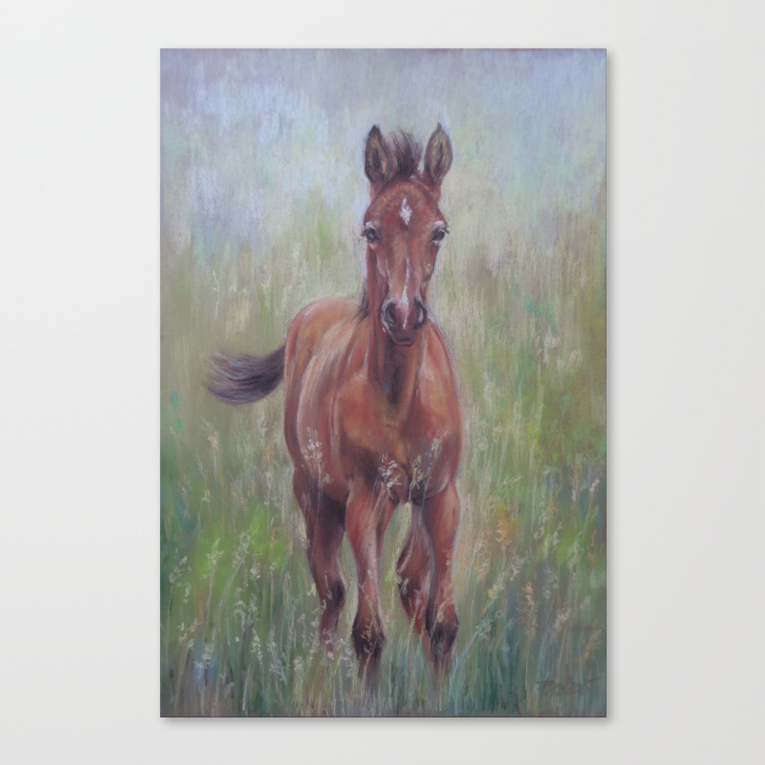 Baby Horse Foal In The Spring Meadow Cute Horse Portrait Pastel Drawing Canvas Print By Canisart Society6