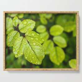Plant Patterns - Green Scene Serving Tray