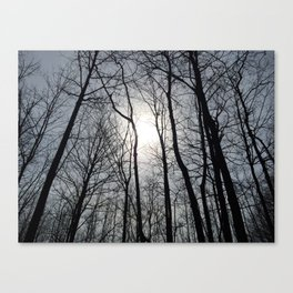 White Sky, Black Trees Canvas Print