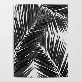 Palm Leaf Black & White III Poster