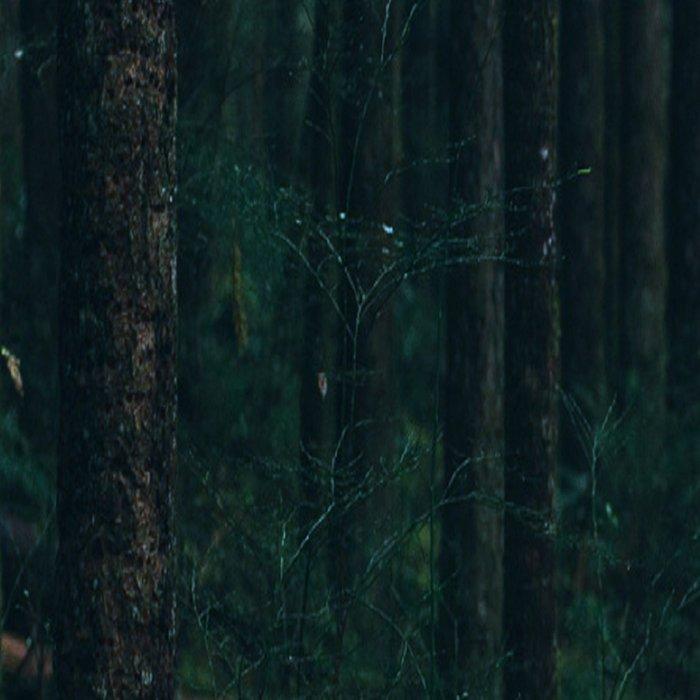 Forest mood Leggings