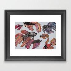 Betta Framed Art Print