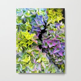 Green purple hydrangea Metal Print