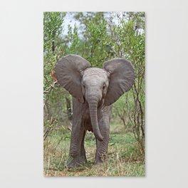 Small Elephant - Africa wildlife Canvas Print