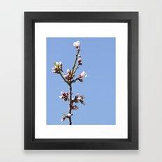 Blossom Branch Framed Art Print