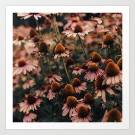 Echinacea Flowers  2 Art Print