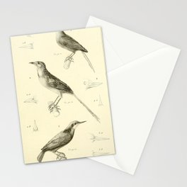 Vintage Animal Illustration - 1829 - Apolinar's Wren, Indian Nuthatch Stationery Cards