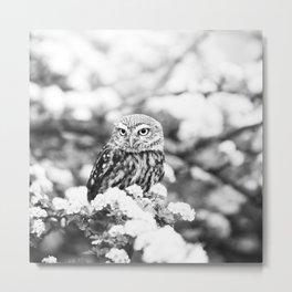 Owl in Flowering Tree Metal Print
