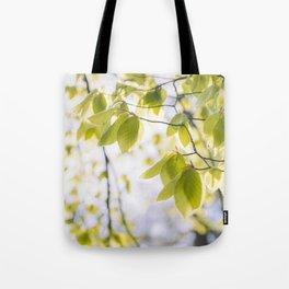 Sunlight through new Spring Beech leaves (Fagus sylvatica). Norfolk, UK Tote Bag