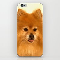 pomeranian iPhone & iPod Skins featuring Cute Pomeranian dog by Bruce Stanfield