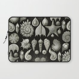 Ernst Haeckel - Thalamphora (Seashells) Laptop Sleeve