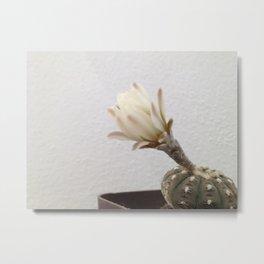 Cactus blooming Metal Print