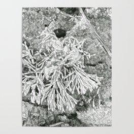 Beautiful coralline algae Poster