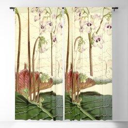 Streptocarpus saundersii 'Cape primrose' 1861 Blackout Curtain