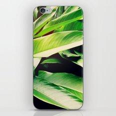 Leaves of Paradise iPhone & iPod Skin