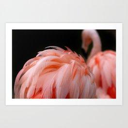 Flamingo Feather Art Print