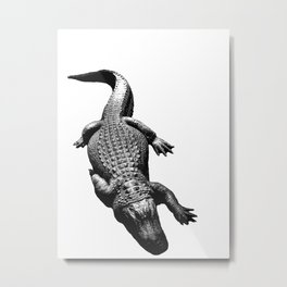 Alligators Love to Swim Metal Print