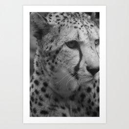Cheetah Black & White Art Print