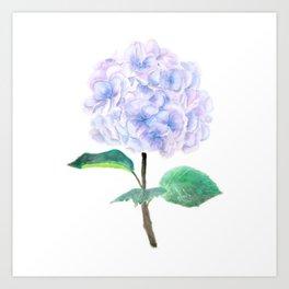 purple blue hydrangea Art Print