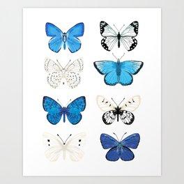 Butterflies - blue and white, butterfly art, blue and white art, butterfly sticker, butterflies Art Print