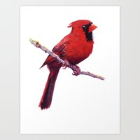cardinal Art Prints featuring Cardinal by Ginger Opal