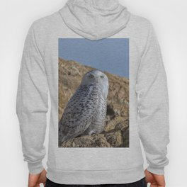 Snowy Owl with a strange look Hoody