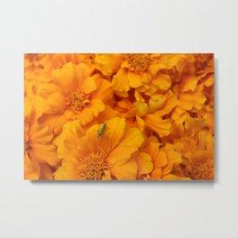 Among the Marigolds Metal Print