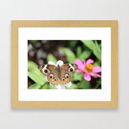 Beautiful Buckeye Butterfly Framed Art Print