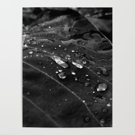 Greenery and leaf V Black and white Poster