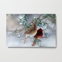 Shining on Her Own (Cardinal) Metal Print