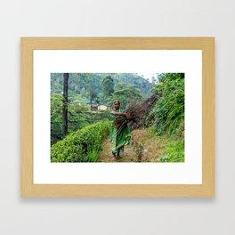 Mackwoods Framed Art Print