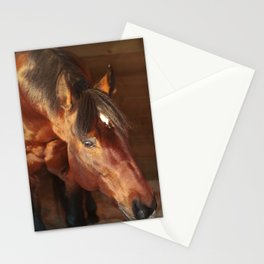 horse collection. in box Stationery Cards
