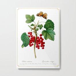 Ribes rubrum Metal Print