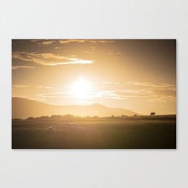 Sheep grazing in Lake District at sunset in England Canvas Print