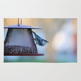 White Breasted Nuthatch Rug