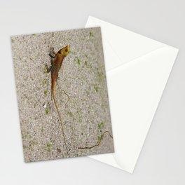 Tiny Dragon Stationery Cards